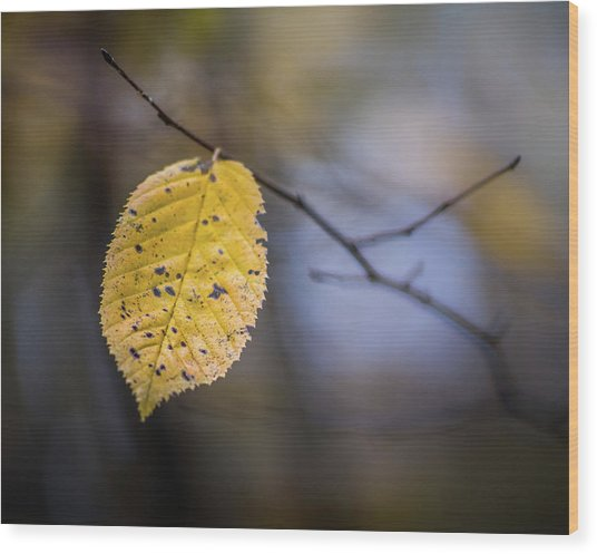 Wood Print featuring the photograph Bright Fall Leaf 3 by Michael Arend