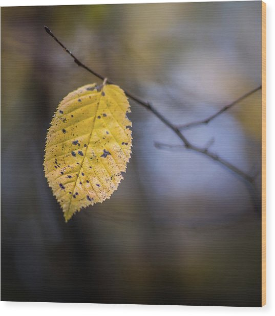 Wood Print featuring the photograph Bright Fall Leaf 5 by Michael Arend