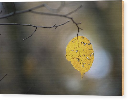 Wood Print featuring the photograph Bright Fall Leaf 6 by Michael Arend