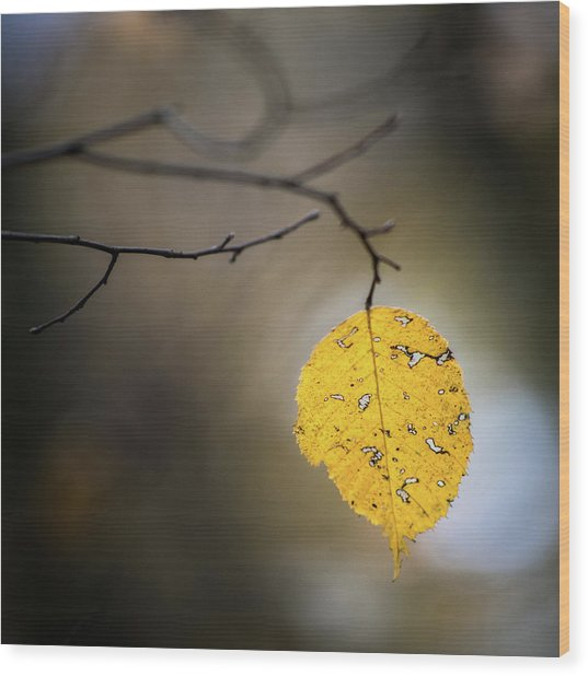Wood Print featuring the photograph Bright Fall Leaf 7 by Michael Arend