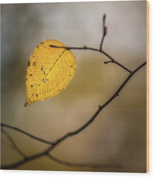 Wood Print featuring the photograph Bright Fall Leaf 8 by Michael Arend