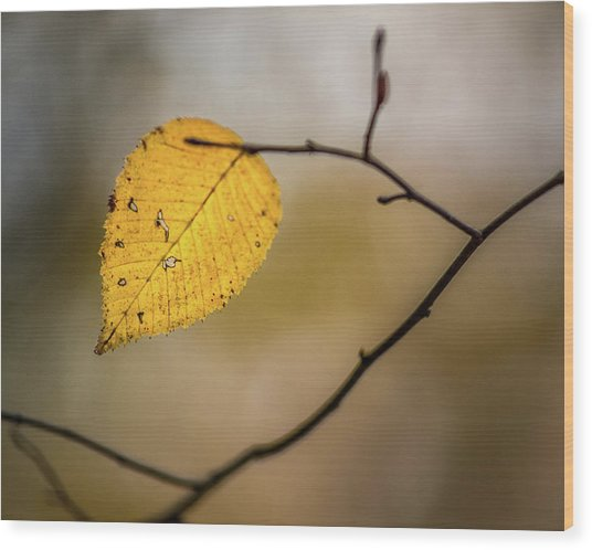 Wood Print featuring the photograph Bright Fall Leaf 9 by Michael Arend