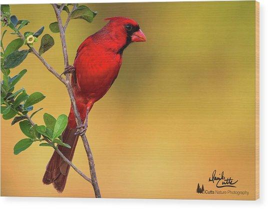 Bright Red Cardinal Wood Print