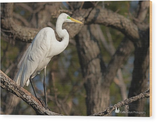 Bright White Heron Wood Print