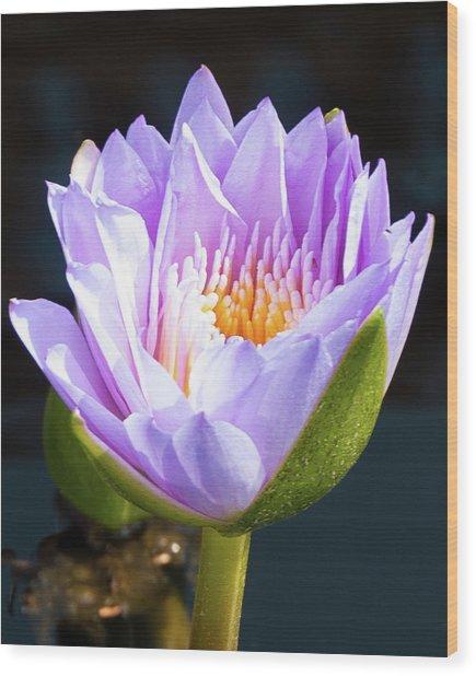 Brillance In Purple Wood Print