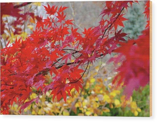 Brilliant Fall Color Wood Print