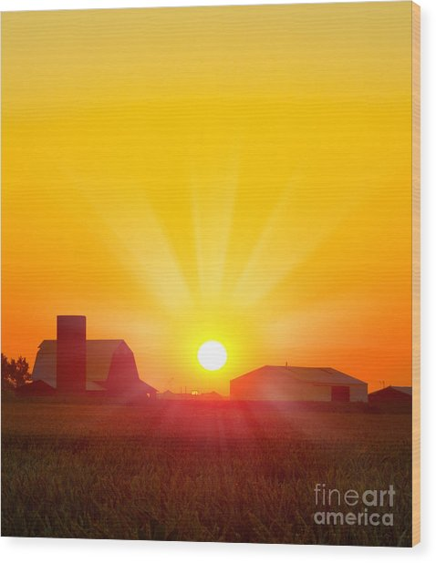 Brilliant Orange Sunrise Over A Corn Wood Print