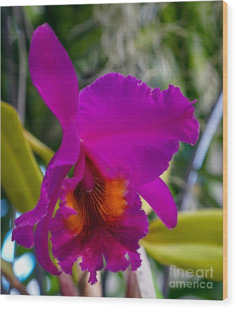 Brilliant Orchid Wood Print