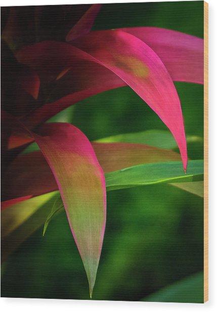 Bromelia Wood Print