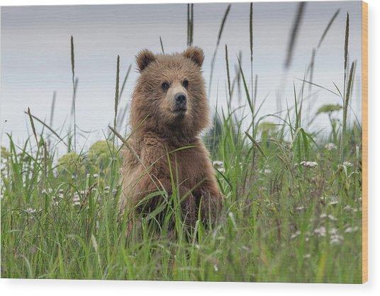Brown Bear Cub In A Meadow Wood Print