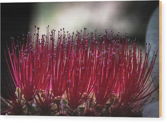 Brush Flower Wood Print