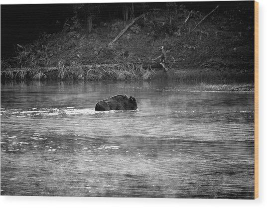 Buffalo Crossing Wood Print
