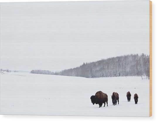 Buffalo Or Bison On The Plains In Winter Wood Print by Imaginegolf