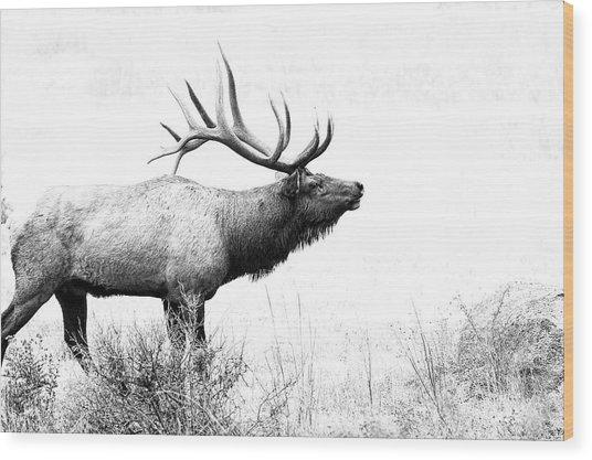 Bull Elk In Rut Wood Print