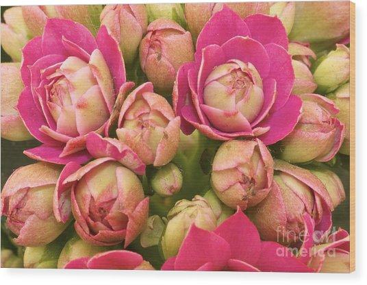 Burgeoning Little Wonderful Pink Wood Print by Caglayan Unal Sumer