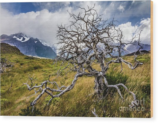 Burnt Tree, Torres Del Paine, Chile Wood Print