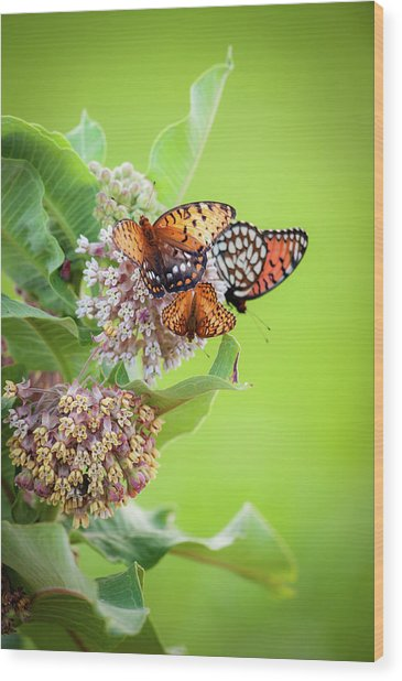 Butterfly Buffet II Wood Print