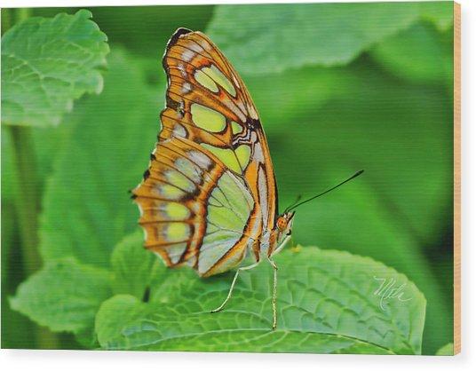 Butterfly Leaf Wood Print