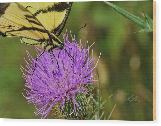 Butterfly On Bull Thistle Wood Print