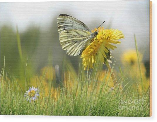 Butterfly On Dandelion Wood Print