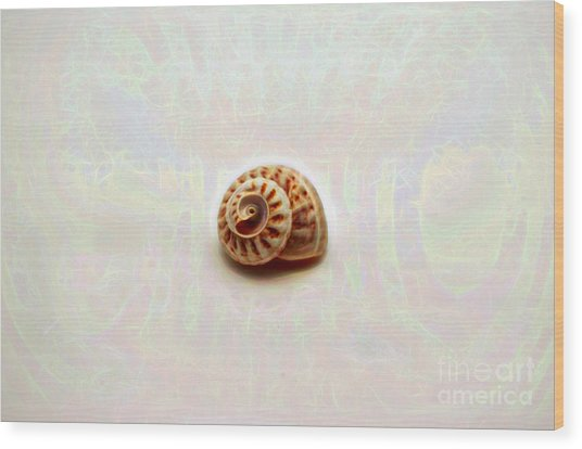 Wood Print featuring the photograph Button Snail Shell by Patti Whitten
