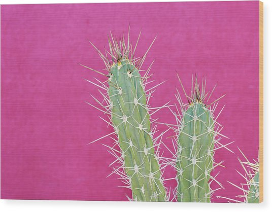 Cactus Against A Bright Pink Wall Wood Print