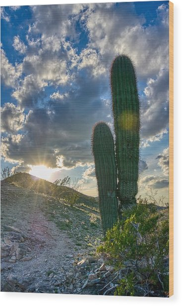 Cactus Portrait  Wood Print