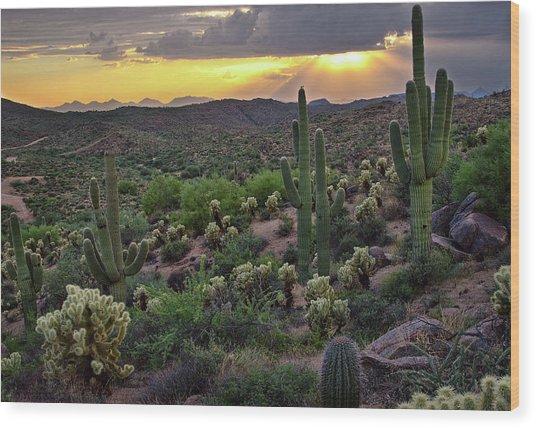 Cactus Sunset Wood Print