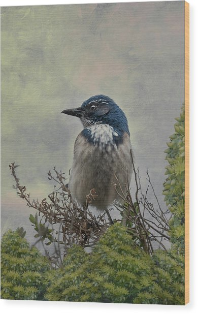 California Scrub Jay - Vertical Wood Print
