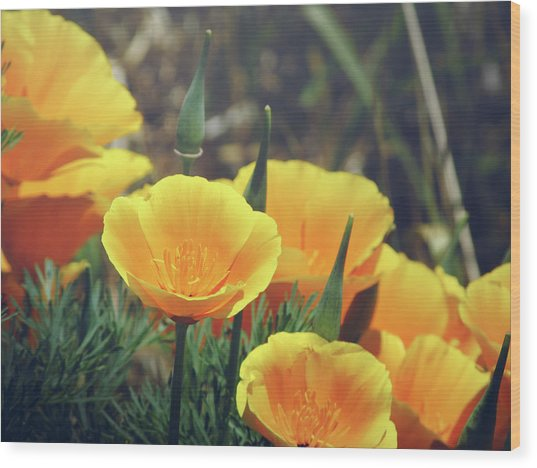 Californian Poppies In The Patagonia Wood Print