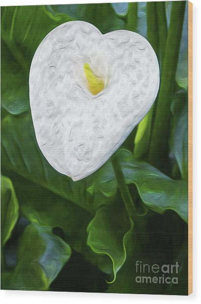 Calla Lily I Wood Print