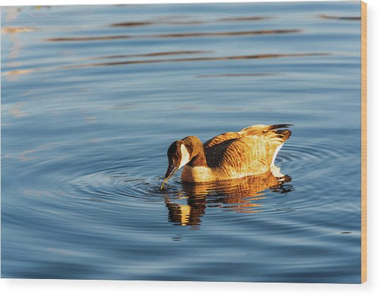Canada Geese At Marsh Island Wood Print