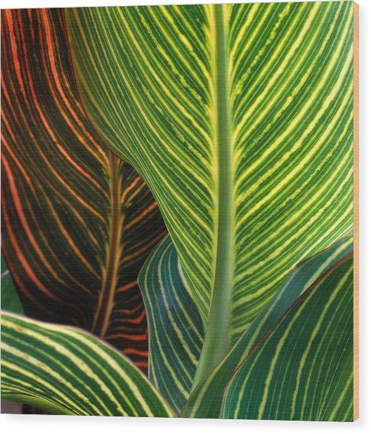 Canna Pretoria. Detail Of Leaves Wood Print