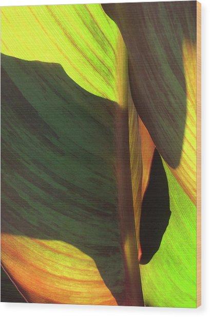 Canna_2043_17 Wood Print