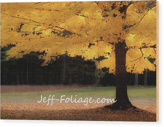 Canopy Of Gold Fall Colors Wood Print