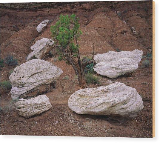Canyon Pods Wood Print