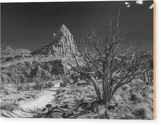 Capitol Reef Np - But, It's A Dry Heat... Wood Print
