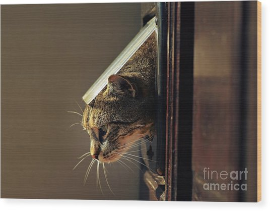 Cat Crawls Out Of The House Through A Wood Print