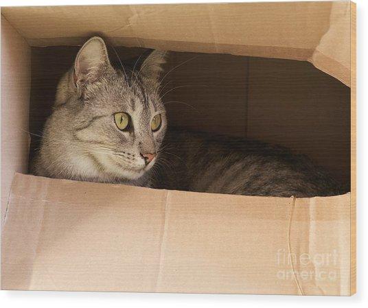 Cat Hiding In Paper Box, Curious Kitten Wood Print