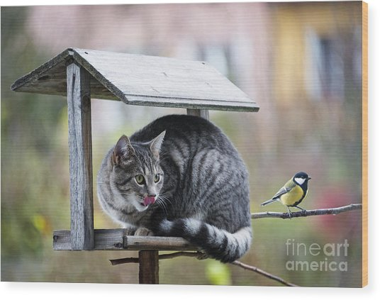 Cat Hunting A Bird Wood Print