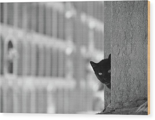 Cat In Cemetery Wood Print by All Copyrights Reserved By Harris Hui