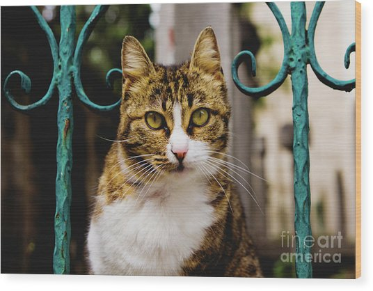 Cat On A Fence Wood Print