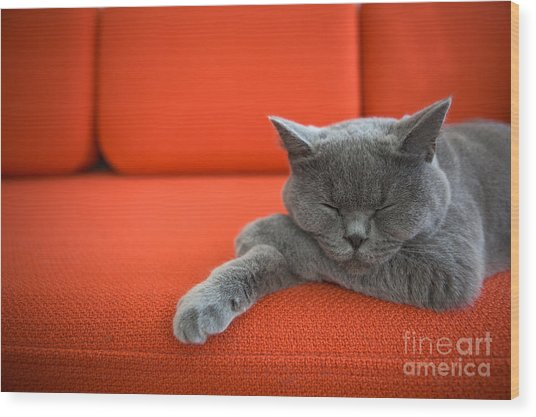 Cat Relaxing On The Couch Wood Print