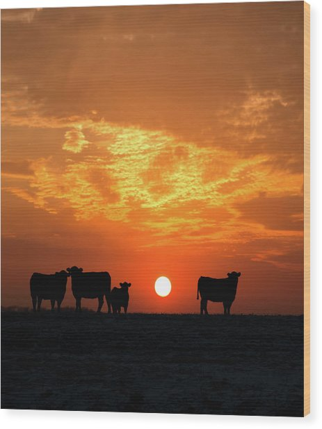 Cattle At Sunset Wood Print