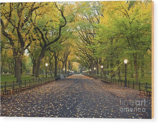 Central Park. Image Of  The Mall Area Wood Print