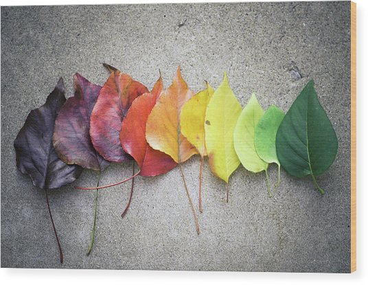 Change Wood Print by Jeff Minarik Photography - Chicago,il