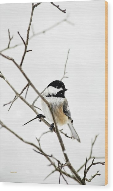 Charming Winter Chickadee Wood Print