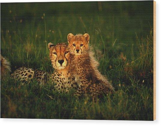 Cheetah Acinonyx Jubatus With Cubs In Wood Print by Art Wolfe