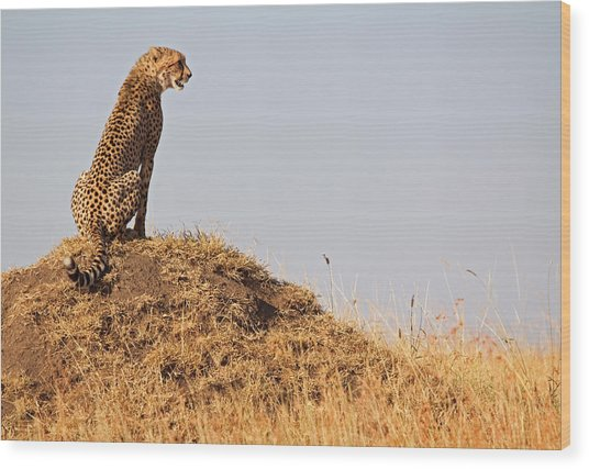 Cheetah With A View Wood Print