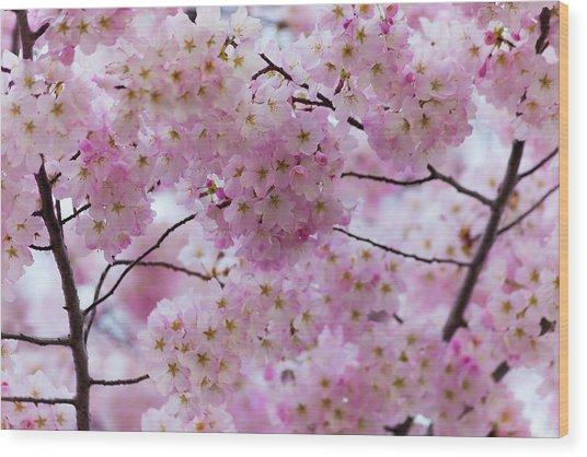 Cherry Blossoms 8625 Wood Print